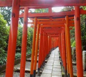 P6100448  Nezu sanctuaire Torii