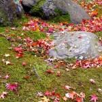 PB280827 feuilles d'erable (3)