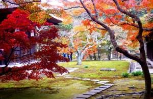 PB280838  erables de Chojuzen-ji